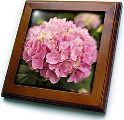 3D Rose ft_89371_1 Georgia, Pink hydrangea flower in Savannah garden - US11 JWL0174 - Joanne Wells - Framed Tile, 8 by 8-Inch