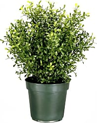 National Tree Company Argentia Plant with Green Pot, Size: 24 in. - LAR4-700-24-1