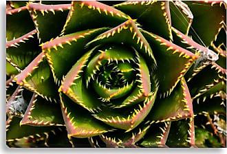 Gallery Direct Green Monster Indoor/Outdoor Canvas Print, Size: Medium - NE73316
