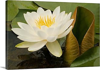 Great Big Canvas White Waterlily with Green Lilypads Canvas Wall Art Print - MM1083_24_24X16_NONE