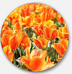 DESIGN ART Designart Fresh Tulip Flowers on Sunny Day - Floral Round Metal Wall Art - Disc of 11 11 H x 11 W x 1 D 1P Green/Orange