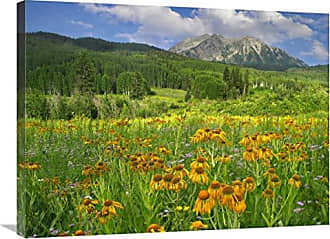 Bentley Global Arts Global Gallery Budget GCS-397112-2432-142 Tim Fitzharris Orange Sneezeweed Blooming in Meadow with East Beckwith Mountain in The Background Colorado Gallery Wrap Giclee on Canvas Print Wall Art