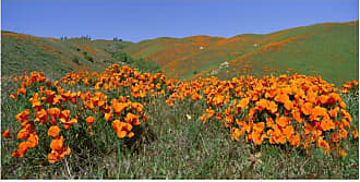 West of the Wind Field Of Orange Outdoor Wall Art - OU-80558-2448 (FIELD OF ORANGE)
