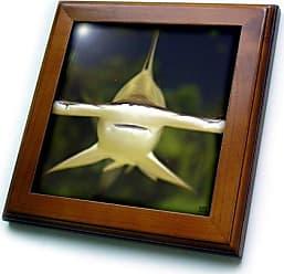 3D Rose ft_45517_1 Scalloped Hammerhead Shark, Sphyrna Lewini Viviparous-Framed Tile, 8 by 8-Inch