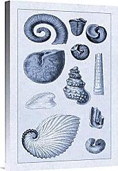 Bentley Global Arts Global Gallery Budget GCS-394520-1624-142 G.B. Sowerby Shells: Ammonacea (Blue) Gallery Wrap Giclee on Canvas Wall Art Print