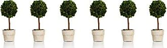 Zodax 6 Tall Preserved Boxwood Topiary, Ball Shaped (Set of 6)