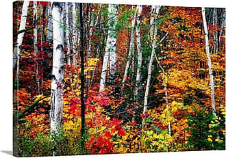 Great Big Canvas Colorful Leaves George Oze New Hampshire Canvas Wall Art Print - 1047221_24_24X16_NONE