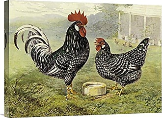 Bentley Global Arts Global Gallery Budget GCS-454838-1824-142 Lewis Wright Chickens: Anconas Gallery Wrap Giclee on Canvas Wall Art Print