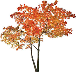 Brewster Home Fashions Home Orange Tree Wall Decals - CR-81127