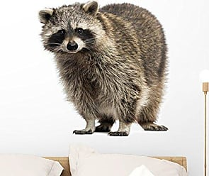 Wallmonkeys Racoon Procyon Iotor Standing Wall Decal Peel and Stick Graphic WM68924 (24 in W x 19 in H)
