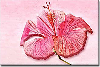 Ready2HangArt Ready2hangart Bruce Bain Rose Hibiscus Canvas Art, 20 H x 30 W