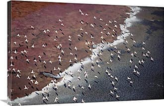 Bentley Global Arts Global Gallery Budget GCS-397051-2436-142 Tim Fitzharris Lesser Flamingo Group Flock Flying Over Soda Flats at The Edge of Lake Magadi Kenya Gallery Wrap Giclee on Canvas Print Wall Art