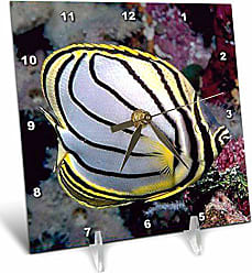3D Rose 3dRose LLC Butterfly Fish Desk Clock, 6 by 6-Inch