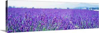 Great Big Canvas Lavender Field in Japan Canvas Wall Art - 65682_24_36X12_NONE