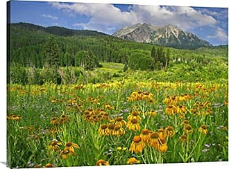 Bentley Global Arts Global Gallery Budget GCS-397112-3040-142 Tim Fitzharris Orange Sneezeweed Blooming in Meadow with East Beckwith Mountain in The Background Colorado Gallery Wrap Giclee on Canvas Print Wall Art