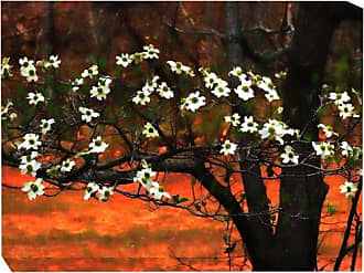 West of the Wind All-Weather Art Print, 30 by 40-Inch, Dogwood at Sunset