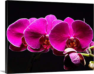Great Big Canvas Purple Orchids Canvas Wall Art - PAG0100240_24_24X18_NONE