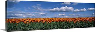Great Big Canvas Orange Tulip Field Skagit Valley Canvas Wall Art Print - 84329_24_36X12_NONE