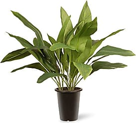 National Tree Company National Tree 30 Inch Garden Accents Green Aspidistra Plant in Black Pot (GAAP30-30G)