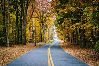 Noir Gallery Autumn Color and Road in Maryland Canvas Wall Art - ESMD-01-TW-08