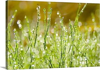 Great Big Canvas Morning Dew Canvas Wall Art - 1046970_24_24X16_NONE