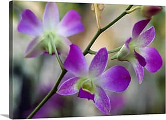 Great Big Canvas Cattleya Orchid Flower Blossoms Close Up Canvas Wall Art Print - 102829_24_24X16_NONE