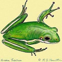 Betsy Drake DM040 Coastal Green Tree Frog Door Mat, 18 x 26