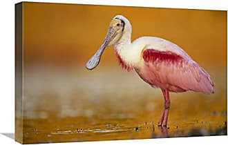 Bentley Global Arts Global Gallery Budget GCS-397103-1624-142 Tim Fitzharris Roseate Spoonbill Adult in Breeding Plumage Standing in Golden Colored Water North America Gallery Wrap Giclee on Canvas Print Wall Art