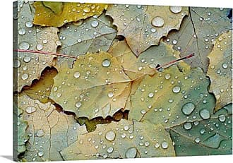 Great Big Canvas Fallen Turning Leaves after the Rain Canvas Wall Art Print - MM1133_24_24X16_NONE