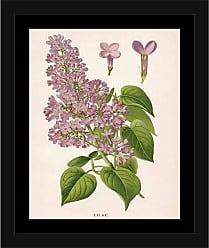 EAZL Vintage Lilac Antique Flower Nature Engraving Tan & Pink, Framed Canvas Art by Pied Piper Creative