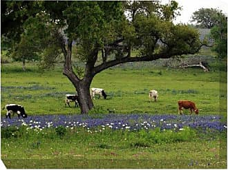 West of the Wind All-Weather Art Print, 30 by 40-Inch, Longhorns Grazing