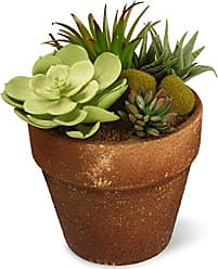 National Tree Company National Tree 10 Inch Garden Accents Potted Green Succulent (GAPS30-10G)