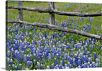 Great Big Canvas Bluebonnet Flowers Blooming Around Weathered Wood Fence Wall Art - 102343_24_24X16_NONE