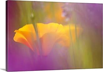 Great Big Canvas Orange Poppies Amidst Lavender Canvas Wall Art Print - MM1058_24_24X16_NONE