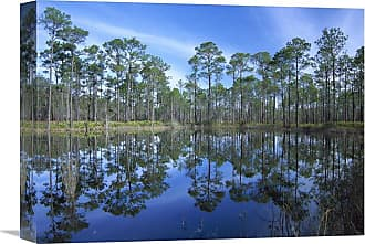 Global Gallery Pine Forest Mirrored in Reflection Pond Ochlocknee River State Park Florida Wall Art - GCS-452063-1216-142