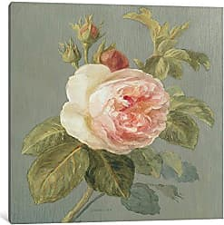 iCanvas ART WAC183 Heirloom Pink Rose Canvas Print by Danhui Nai, 37 by 37-Inch, 0.75-Inch Deep