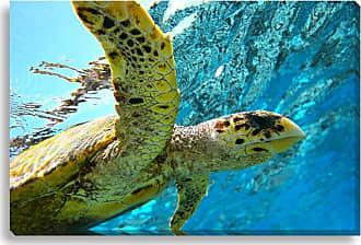 Gallery Direct Sea Turtle Swim Indoor/Outdoor Canvas Print, Size: Medium - NE73278