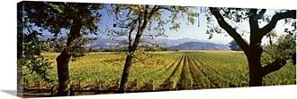 Great Big Canvas Vineyard Far Niente Winery Napa Valley California Canvas Wall Art Print - 34225_24_36X12_NONE