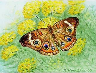 Betsy Drake DM763 Buckeye Butterfly Door Mat, 18 x26