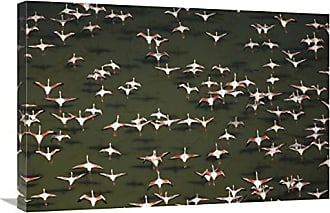 Bentley Global Arts Global Gallery Budget GCS-396731-2030-142 Tim Fitzharris Aerial View of A Mixed Flock of Lesser Flamingo Group Kenya Africa Gallery Wrap Giclee on Canvas Print Wall Art