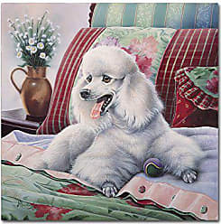 Trademark Global White Poodle by Jenny Newland, 24x24-Inch Canvas Wall Art