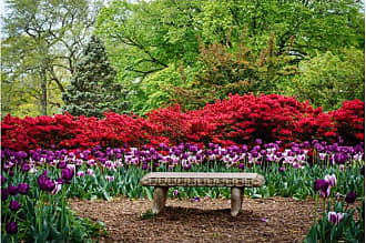 Noir Gallery Bench and Gardens in Baltimore Canvas Wall Art - BAL-04-TW-08