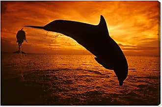 The Oliver Gal Artist Co. The Oliver Gal Artist Co. Nautical and Coastal Wall Art Canvas Prints Bottlenose Dolphin Roatan by David Fleetham Home Décor, 60 x 40, Black, Orange