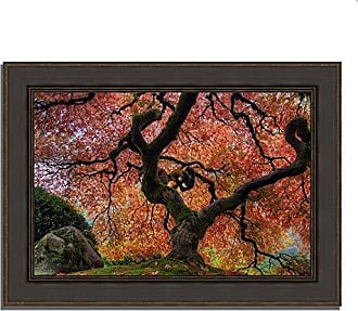 Tangletown Fine Art Japanese Maple in Autumn Framed Art, Green/Brown/Maroon/Burgundy