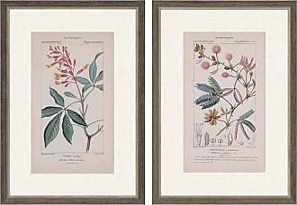 Paragon Picture Gallery Botanique in Pink II Wall Art - Set of 2 - 3872