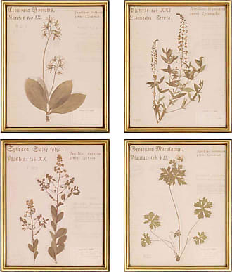 Paragon Picture Gallery Botanicals Wall Art - Set of 4 - 3518