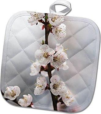 3dRose phl/_265551/_1 Pot Holder Soft pink sakura flowers in spring 8 by 8