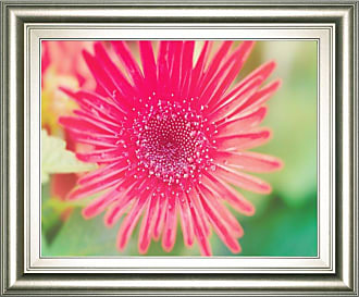 Classy Art Pink Gerbera Framed Wall Art - 8240