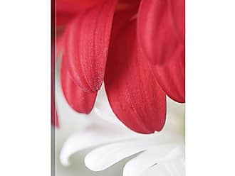 Great Big Canvas Red Gerbera Petals Detail by Mike Moats Canvas Wall Art - MM1042_24_16X24_NONE