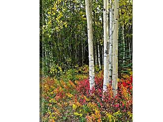 Great Big Canvas Colorful View of Aspen Tree Trunks and Fall Foliage Kenai Peninsula Canvas Wall Art Print - AKSPLCY0028_24_16X24_NONE